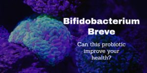 Photo of bifidobacterium breve microorganisms which have probiotic qualities for humans