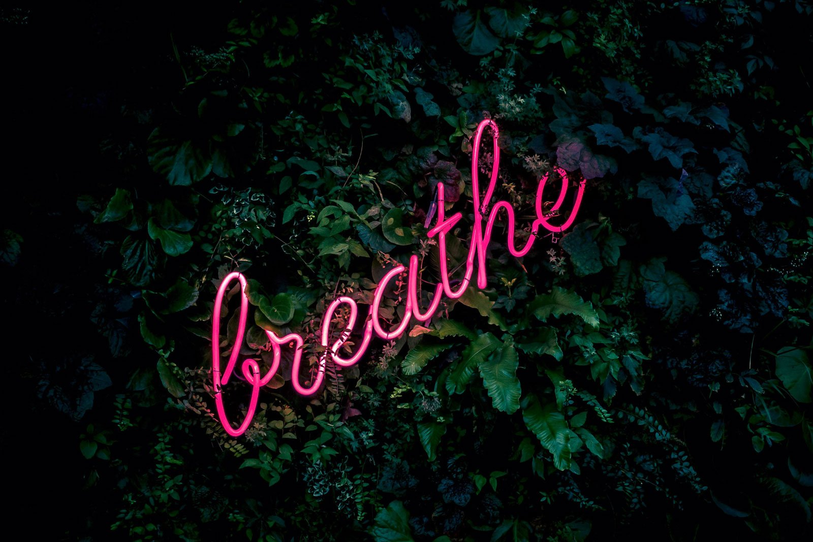 Image of the word 'breathe' in pink letters in front of some leaves