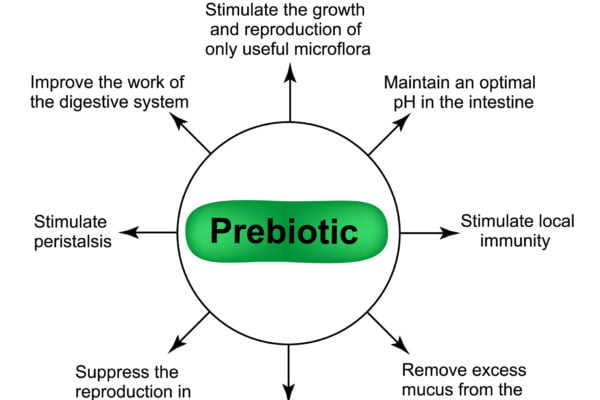 Graphic explaining what prebiotics are